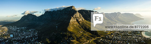 Südliches Afrika Südafrika Löwe Panthera leo Berg camping Tafelberg Bucht Kapstadt Western Cape Westkap