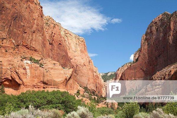 Vereinigte Staaten von Amerika  USA  Schlucht  Zimmer  Süden  Utah