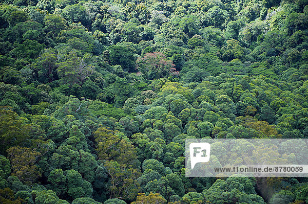 Nationalpark Baum Wald Holz Regenwald Australien Queensland Springbrook