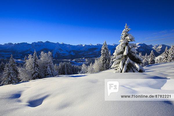 Kälte Panorama Europa Schneedecke Berg Winter Baum Himmel Schnee Wald Holz Berggipfel Gipfel Spitze Spitzen Alpen blau Ansicht Fichte Tanne Westalpen schweizerisch Schweiz Schweizer Alpen Zentralschweiz