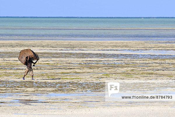 niedrig Mann Gezeiten sammeln Afrika Mosambik