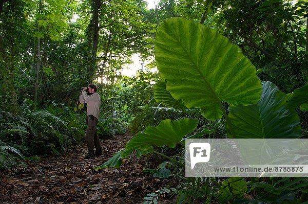 Wald  innerhalb  Insel  Afrika