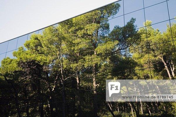 Pinienwald spiegelt sich im modernen  verglasten Gebäude wider