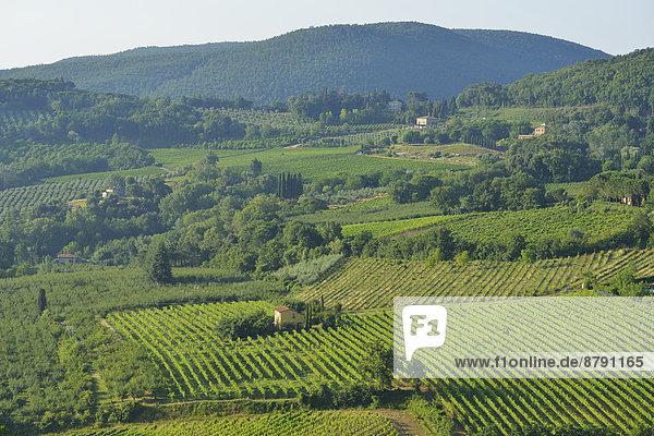 Europa Wohnhaus Wein Baum Landschaft Hügel Produktion Weintraube Kletterpflanze Nachmittag Italienisch Italien Toskana Weinberg