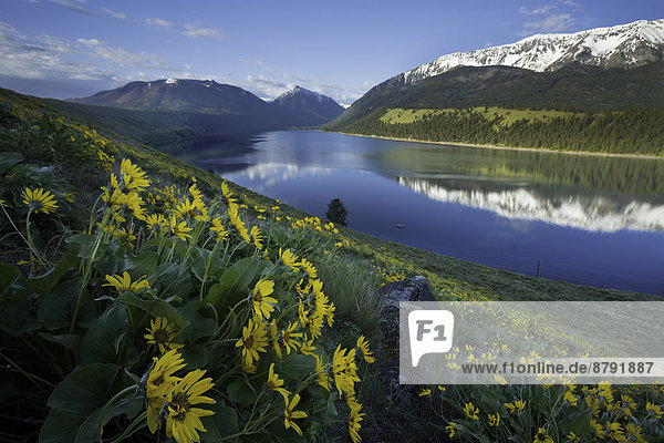 Vereinigte Staaten von Amerika  USA  Gebirge  Wasser  Berg  Amerika  Blume  Sonnenaufgang  See  Wildblume  Moräne  Gebirgszug  Oregon  Wallowa