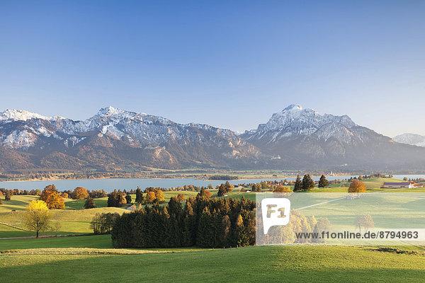 Herbstliche Voralpenlandschaft  Forggensee  hinten die Alpen  Ostallgäu  Allgäu  Oberbayern  Bayern  Deutschland