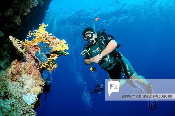 Afrika  Ägypten  Rotes Meer  Scharm El-Scheich  Sharm el-Sheikh