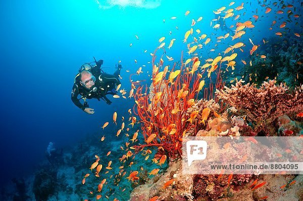 Afrika  Ägypten  Rotes Meer