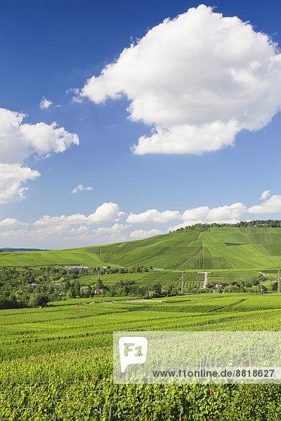 Ausblick von Rotenberg über die Weinberge zum Kappelberg  bei Stuttgart  Baden-Württemberg  Deutschland