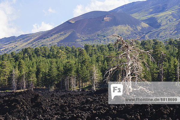 Lava field on the foothills of Mount Etna  Catania  Sicily  Italy