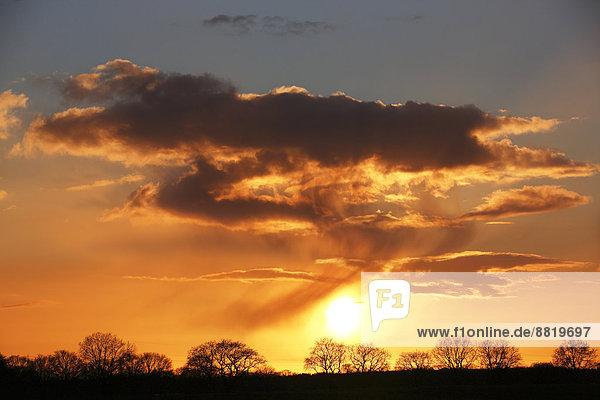 Baumsilhouetten gegen Wolkenhimmel bei Sonnenuntergang  Naturschutzgebiet Oberalsterniederung  Tangstedt  Schleswig-Holstein  Deutschland