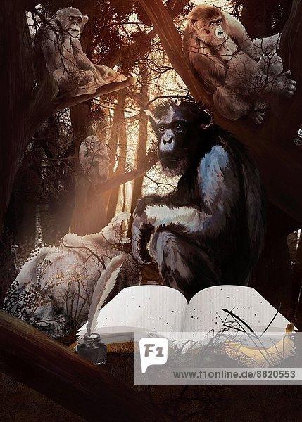 Fotografie Buch Wald Taschenbuch Flasche Gorilla Tinte