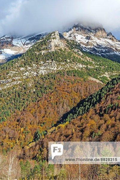 Pineta Valley  Huesca Pyrenees  Aragón  Spain.