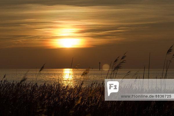 Deutschland  Niedersachsen  Wremen  Nordsee  Sonnenuntergang über der Nordsee