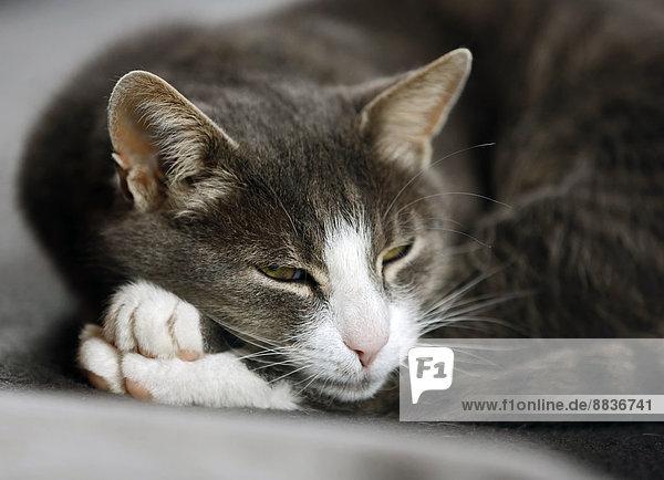 Portrait einer Katze mit halboffenen Augen