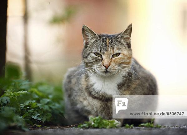 Tabby Katze am Wegesrand liegend