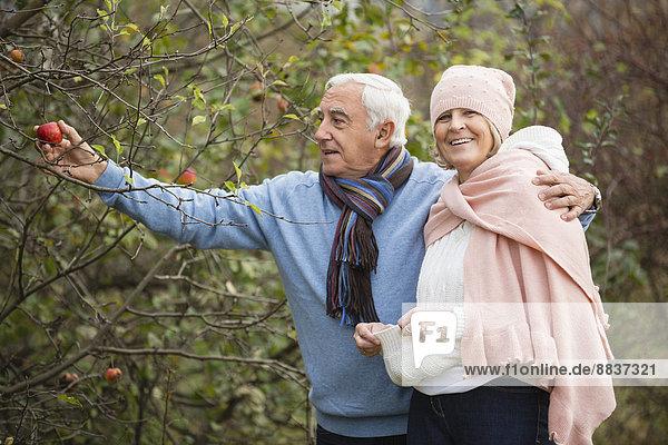 Seniorenpaar beim Äpfel pflücken beim Spaziergang