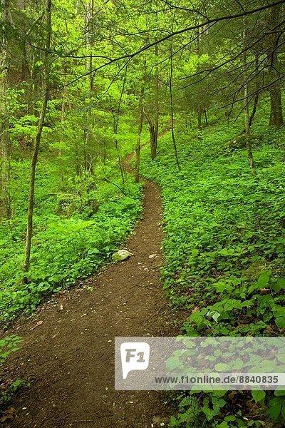 Trail  Spring  Whiteoak Sink  Great Smoky Mountains National Park  TN  USA