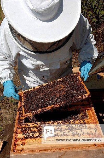 Bee keeping  United Kingdom.