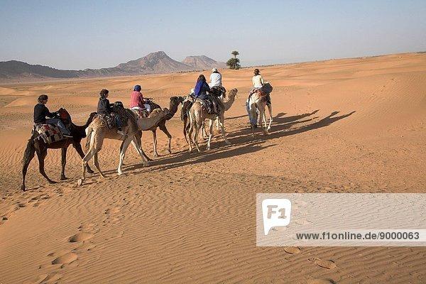 Camel trek  Zagora  Morocco  North Africa  Sahara desert