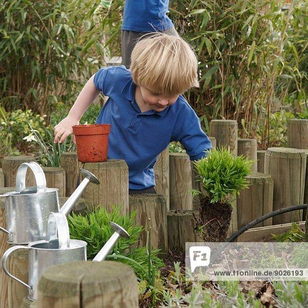 Schuljunge entfernt Pflanze aus dem Topf im Garten