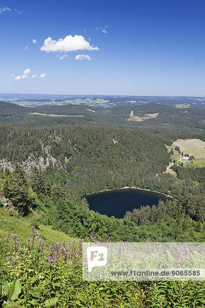 Ausblick vom Feldberg auf den Feldsee  Schwarzwald  Baden-Württemberg  Deutschland