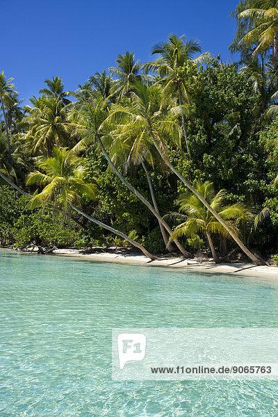 Lagoon with a sandy beach and palm trees  Peleliu  Palau  Micronesia