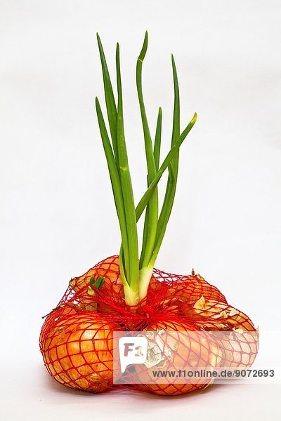 Onions in a bag with new growth.