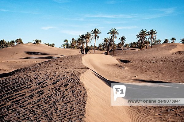 Oasis and palm grove  M´Hamid  Draa Valley  Morocco.