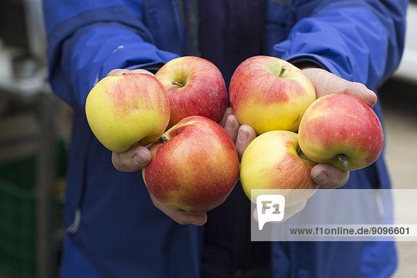 Weibliche Bauernhände mit Bio-Äpfeln