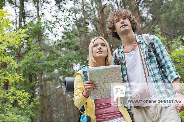 niedrig  Wald  Landkarte  Karte  wandern  Ansicht  Flachwinkelansicht  Winkel