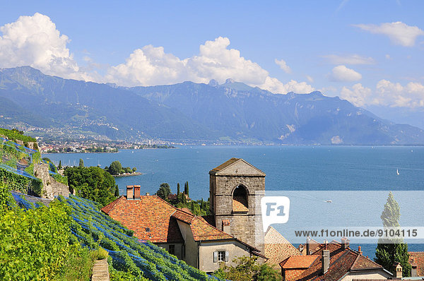 Wein über Produktion See Dorf Ansicht Genf Lausanne Schweiz Kanton Waadt