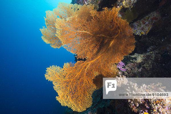 Pazifischer Ozean Pazifik Stiller Ozean Großer Ozean Palau