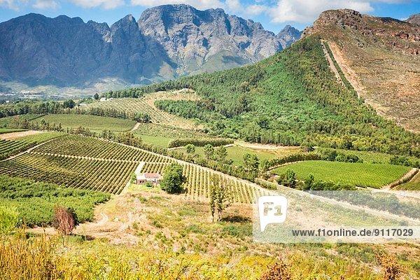 Südliches Afrika Südafrika Franschhoek