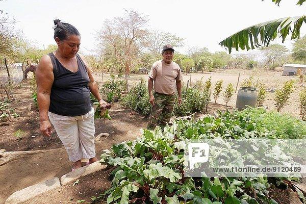 Ehrfurcht Garten Tochter 6 Nicaragua