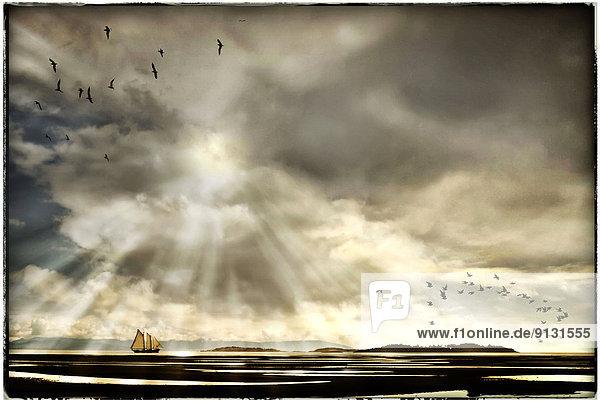 Segeln  Boot  Sonnenlicht  British Columbia  Kanada  Gott  Vancouver Island