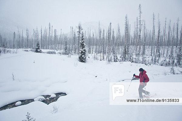 Frau  jung  Kootenay Nationalpark  Schneeschuhlaufen