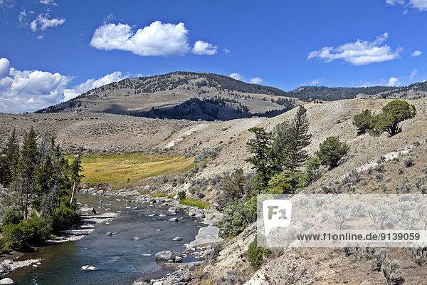Vereinigte Staaten von Amerika  USA  Wisent  europäischer Bison  Bison bonasus  Yellowstone Nationalpark  Wyoming
