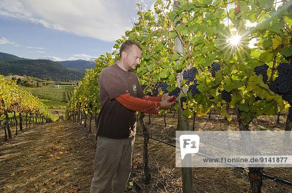 Weingut  Wohngebäude  schneiden  Weintraube  Weinberg  Geographie  Winzer  britisch  Kanada