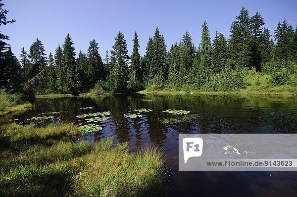 Hund  See  schwimmen  Zimmer  Hollyburn Mountain  British Columbia  Kanada
