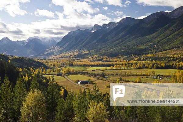 Elch Alces alces nahe Tal Herbst Fernie British Columbia Kanada