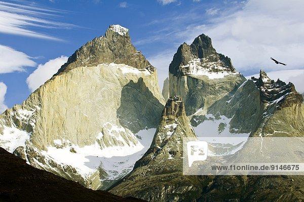 Torres del Paine Nationalpark  Anden  Erwachsener  Chile