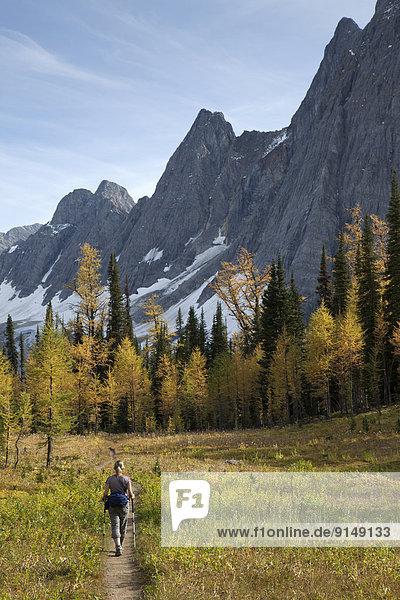 nahe  See  wandern  Wiese  Eisscholle  Lärche  Kootenay Nationalpark  unterhalb  British Columbia  Kanada