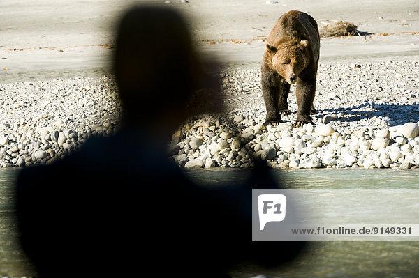 Grizzlybär  ursus horibilis  Grizzly  nahe  British Columbia