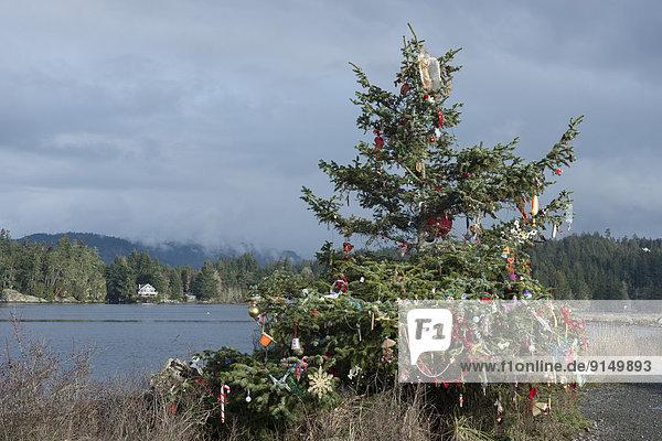 Anschnitt Strand Weihnachtsbaum Tannenbaum Dekoration Gemeinschaft British Columbia Kanada Quimper