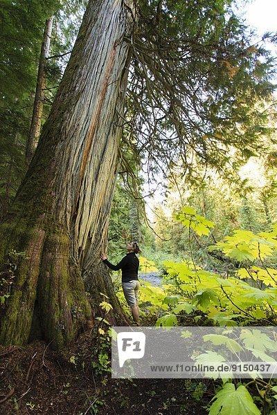 Baum, Zeder, antik, British Columbia