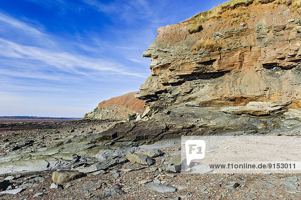Joggins Fossil Cliffs where Bay of Fundy tides expose fossils from the Coal Age's carboniferous forests dating 300 million years ago. Nova Scotia  Canada. World Heritage Site.