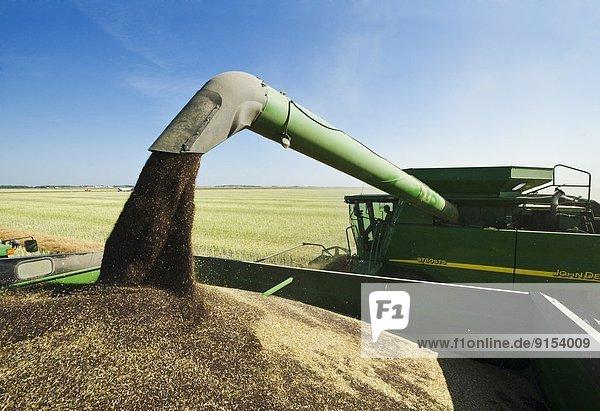 Getreide  ernten  Nutzpflanze  gehen  Mähdrescher  Kanada  Canola  Manitoba