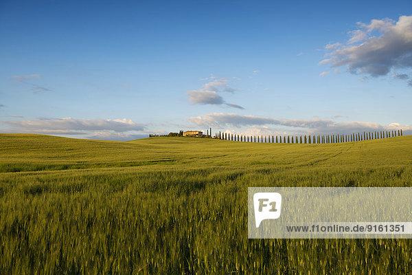 Wohngebäude Baum Landschaft Hügel Abenddämmerung UNESCO-Welterbe Italien Toskana Val d'Orcia Provinz Siena