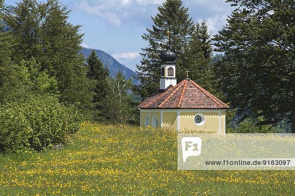 'Kapelle ''Maria Rast auf den Buckelwiesen''  mit blühender Frühlingswiese  Krün  Bayern  Deutschland'
